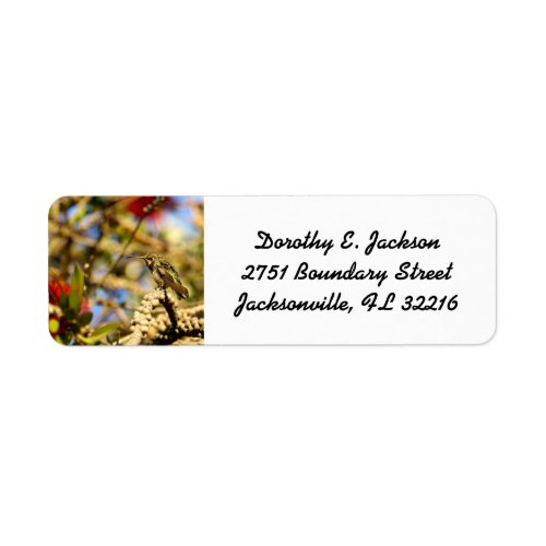 Female Anna's Hummingbird Address Labels