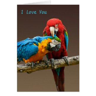 Parrots Love Gold and Blue Macaw Scarlett Macaw Card