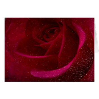A Burgundy Rose in Snow Card
