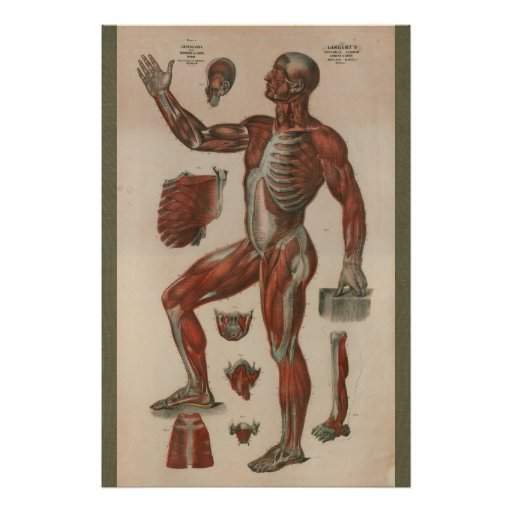 Share your vintage anatomy chart exclusively