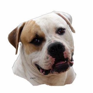American Bulldog X Cake Ideas And Designs