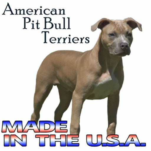 Types of Amazing Pitbull Dog Breeds That Are Popular Today