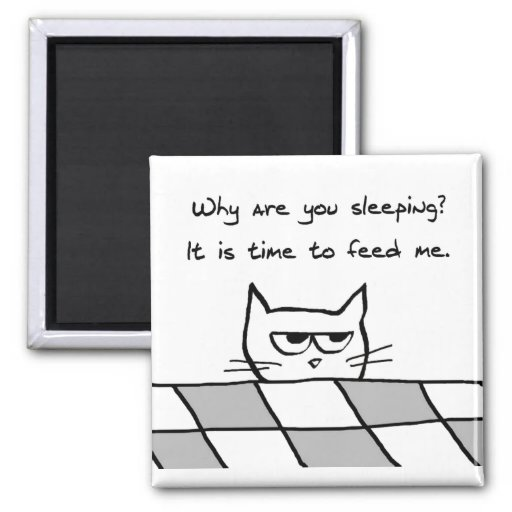 Angry cat wants you out of bed 2 inch square magnet rd674931c67ed469092ec1afcc5256ad0 x7j3u 8byvr 512