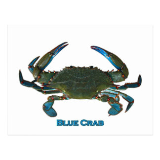 Blue Crab Gifts - Blue Crab Gift Ideas on Zazzle