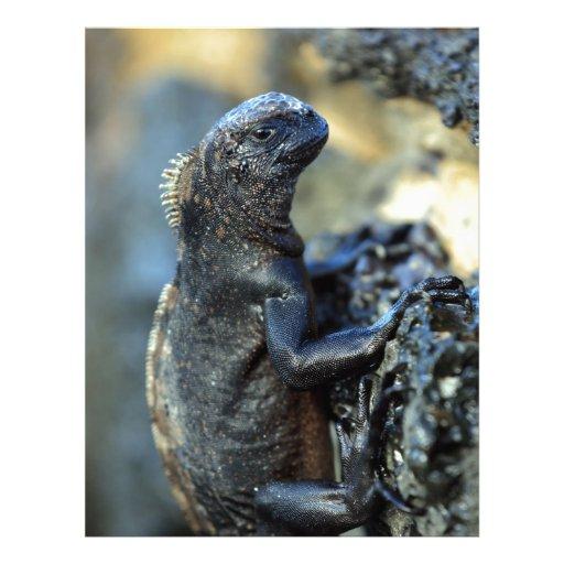 Baby marine iguana Galapagos Islands Letterhead | Zazzle