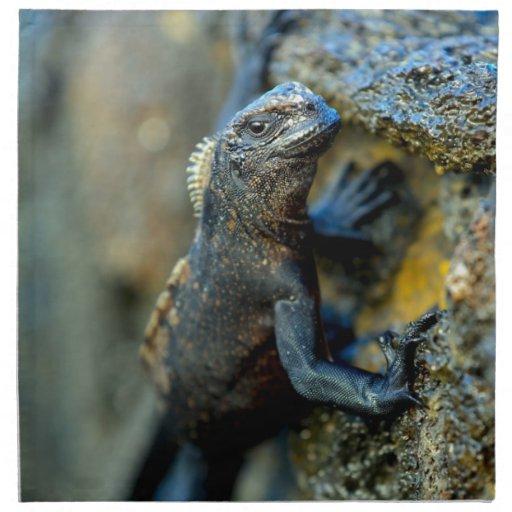 Baby marine iguana Galapagos Islands Napkin | Zazzle