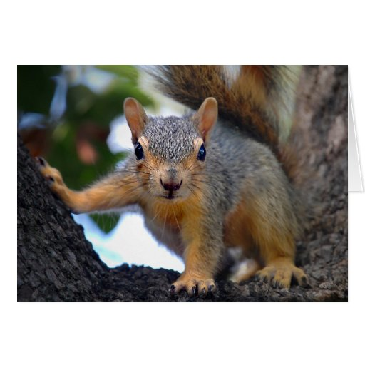 Baby Squirrel in Tree Stationery Note Card | Zazzle