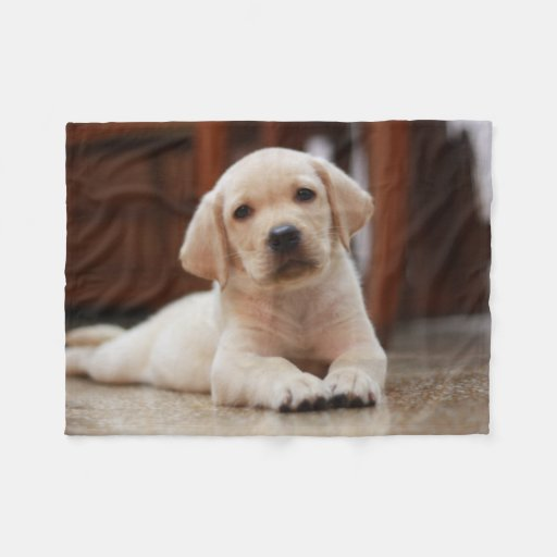 Baby Yellow Labrador Puppy Dog Laying On Belly Fleece