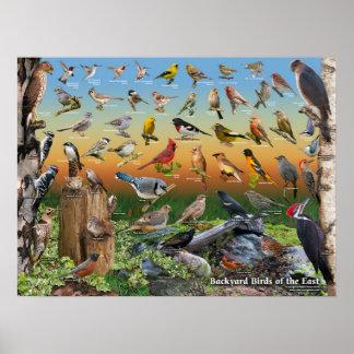 Birds Of North America Posters, Birds Of North America