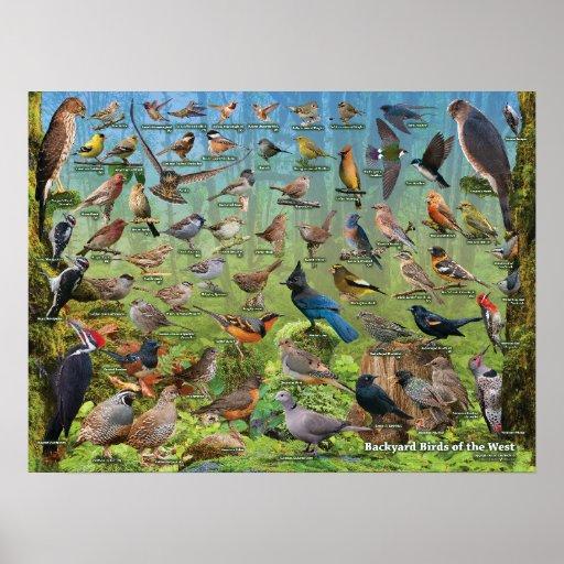 Backyard Birds of the West Poster | Zazzle
