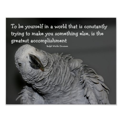 Be Yourself Quotes Cute: Be Yourself Quote Cute Parrot Inspirational Poster