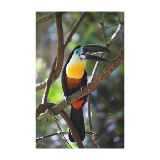 Beautiful Toucan Bird In A Tree Nature Scenery Canvas