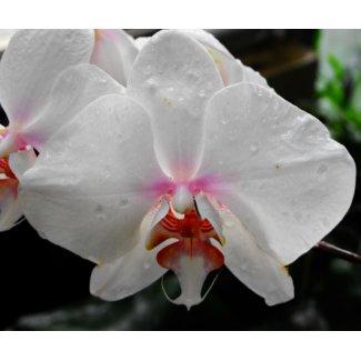 Beautiful White Orchid mousepad