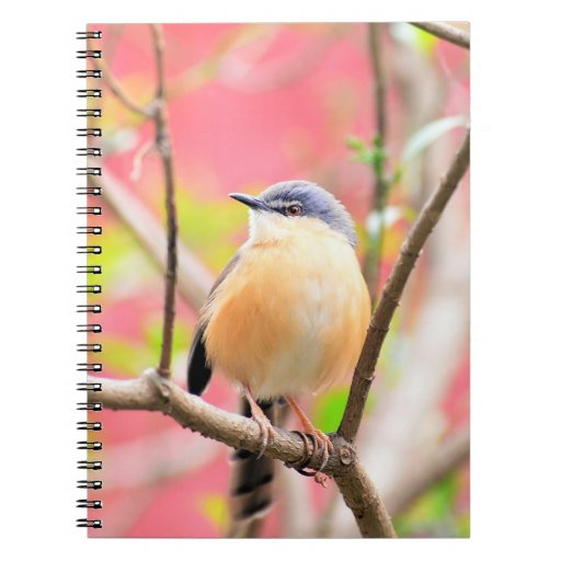 Bird Beautiful Colorful Nature Scenery Spiral Notebook