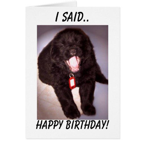 Birthday Card Newfoundland Puppy   Zazzle