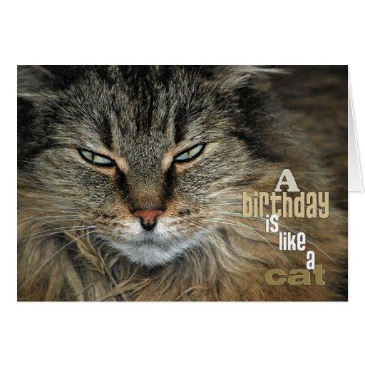 Birthday Maine Coon Cat Humor Card