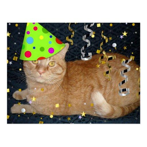 Birthday Orange Cat: Birthday Party Orange Tabby Cat Postcard