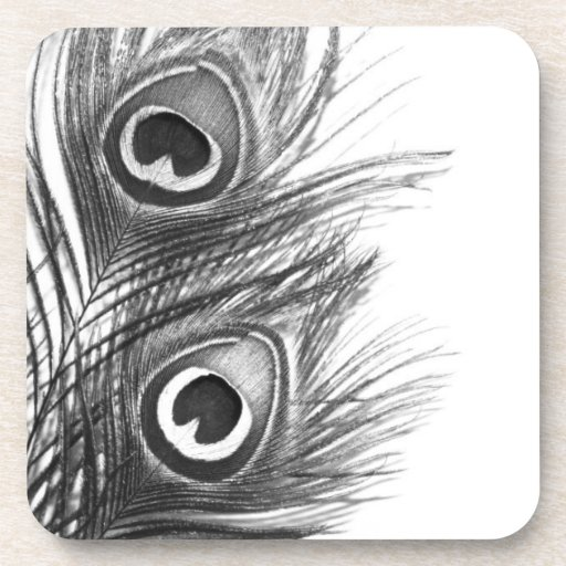 Black and White Peacock Feather Coasters | Zazzle