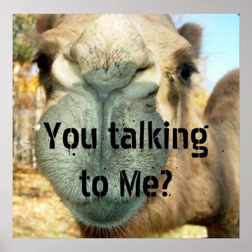 camel face you talking to me poster zazzle. Black Bedroom Furniture Sets. Home Design Ideas