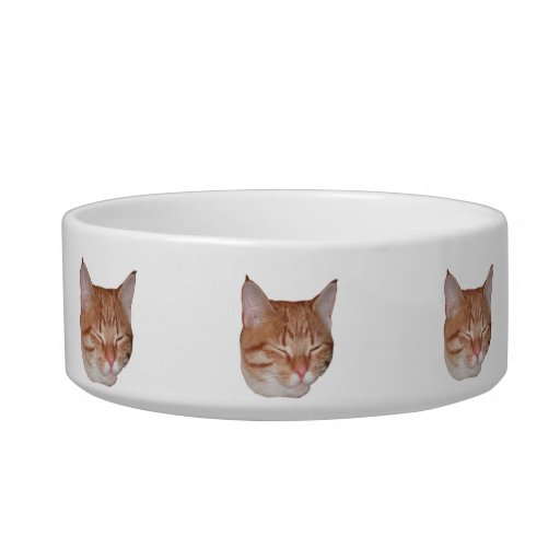 Safe Cat Food Bowls