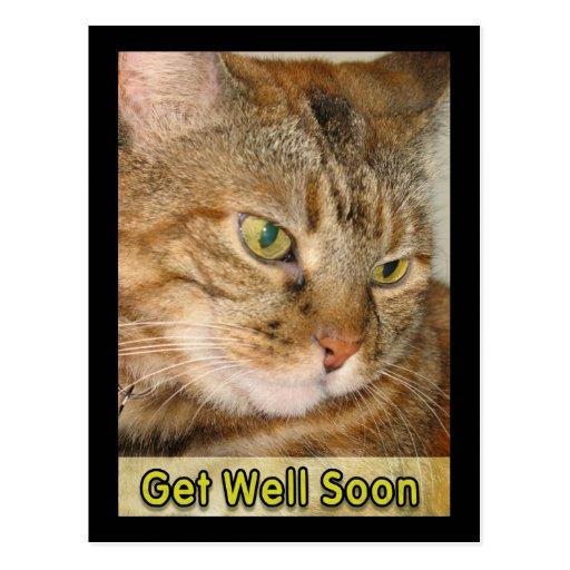 cat get well soon postcard | Zazzle