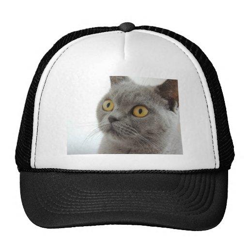 cat pet animal grumpy frown peace love destiny hats. Black Bedroom Furniture Sets. Home Design Ideas
