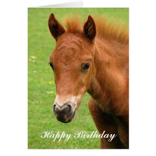 chesnut foal baby horse happy birthday card  zazzle