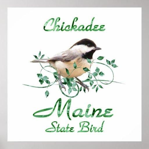 Chickadee Maine State Bird Poster   Zazzle
