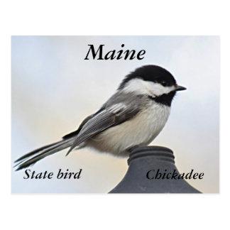 Maine State Bird Gifts on Zazzle