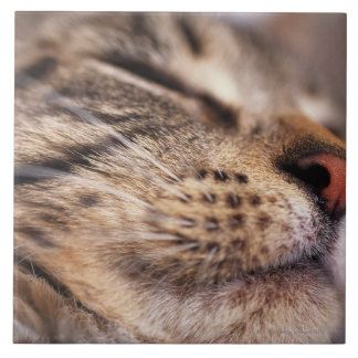 Close Up Of Cat Whiskers And Muzzle Ceramic Tiles