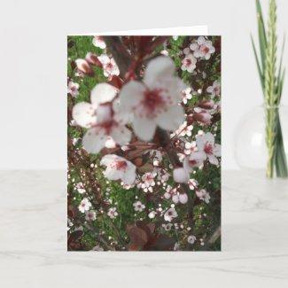 Close-up Sandcherry Tree Cards card