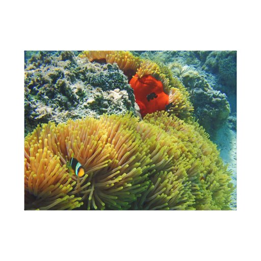 clownfish and anemone canvas print | Zazzle