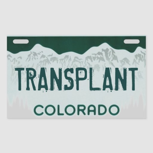 Dmv License Renewal Colorado Springs