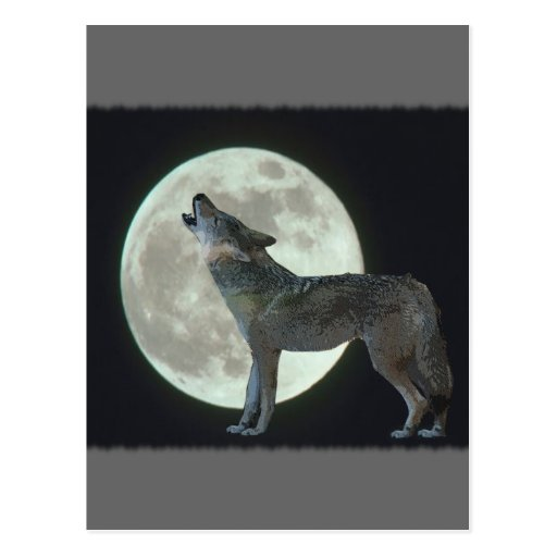 Coyote Howling at the Moon Postcard | Zazzle  Coyote Howling ...