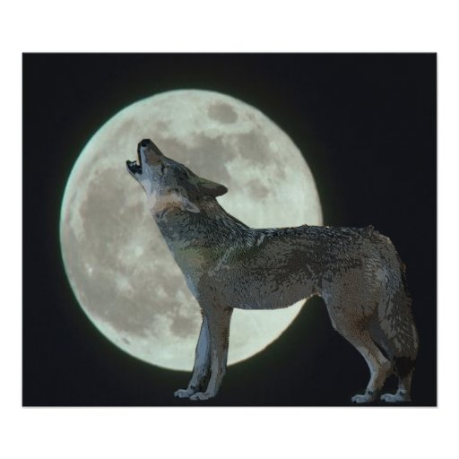 Coyote Howling at the Moon Poster | Zazzle  Coyote Howling ...