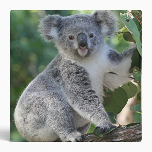 Cute Australian koala in gum tree binder | Zazzle