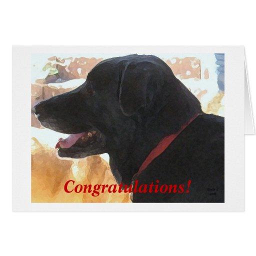 Congratulations funny dog - photo#40