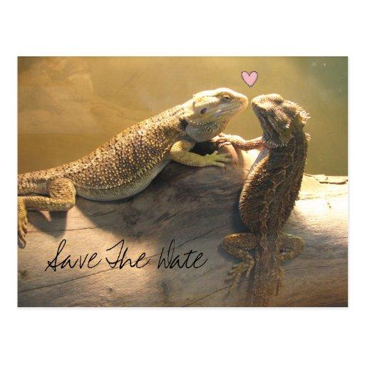 Cute Kissing Lizards Wedding Save The Date Postcard | Zazzle