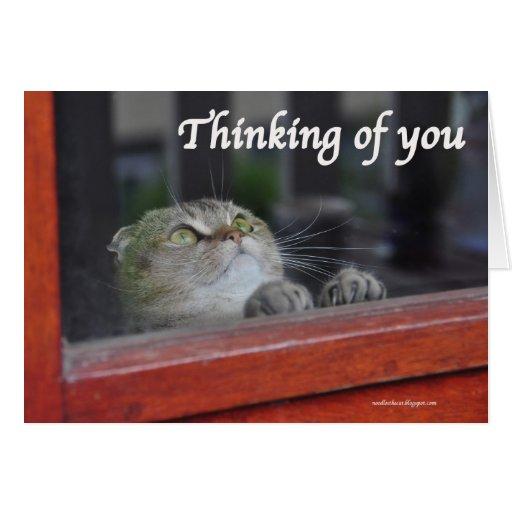 Cute Scottish Fold Cat thinking you pray card | Zazzle
