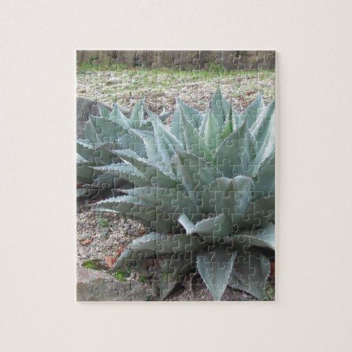 Desert Agave Plants Jigsaw Puzzle | Zazzle