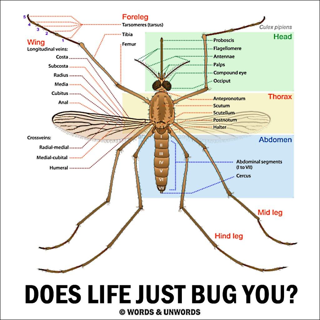 diagram of fuse compartment of mitsubishi eclipse 2001 mosquito bite diagram diagram of mosquito