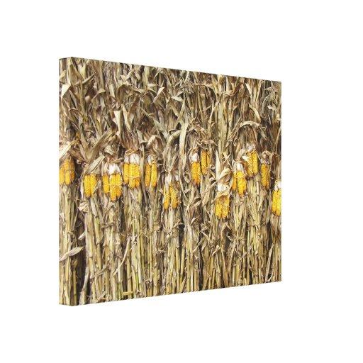 Corn Stalk Decoration Ideas: Dried Corn Stalk Decorations Gallery Wrap Canvas