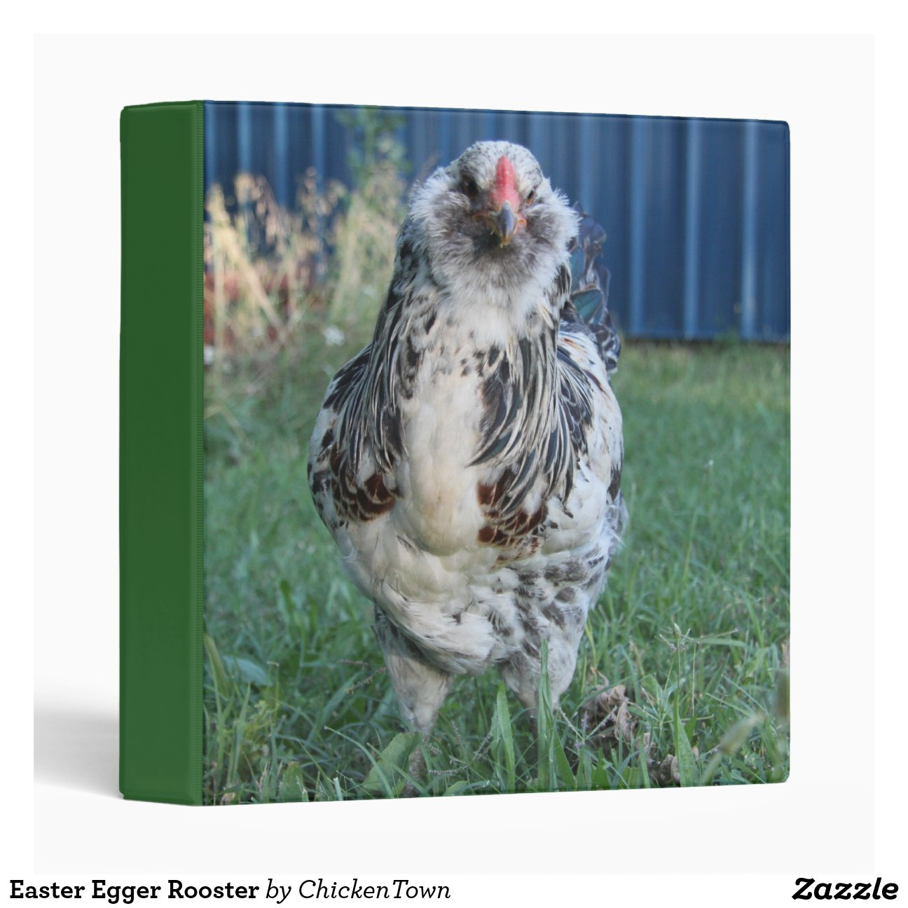 Easter egger chickens roosters