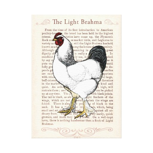 Elegant Rooster Country Style Living Kitchen Decor Stretched - Rooster Country Decor