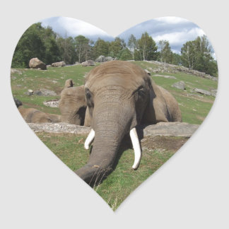 Trunk Up Gifts On Zazzle