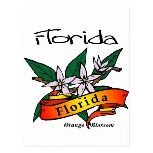 florida state flower orange blossom postcard  zazzle