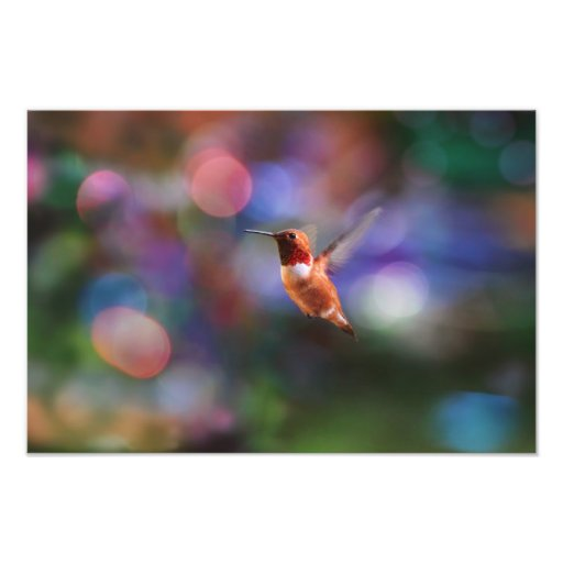 Colorful hummingbirds flying - photo#49