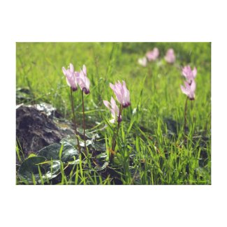 Forest blooming cyclamen gallery wrap canvas
