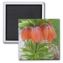 Fritillaria Imperialis Orange Flowers Magnet