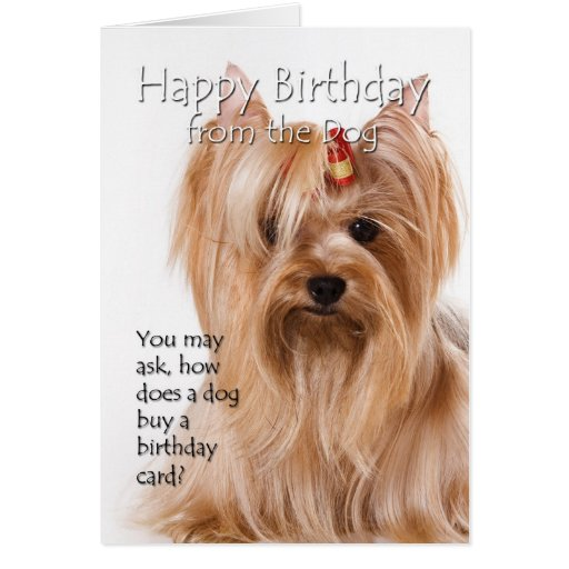 Yorkshire Terrier Birthday Gifts